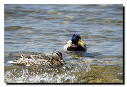 Anibal-Affiliates-RealtyNetWorth-LakeShannon-boys-and-girls-agree-ducks-on-the-lake