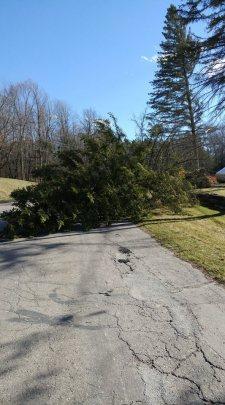 7448Parkwood-downed-tree